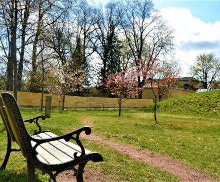 Kirsikkapuisto Ruutikellarin läheisyydessä